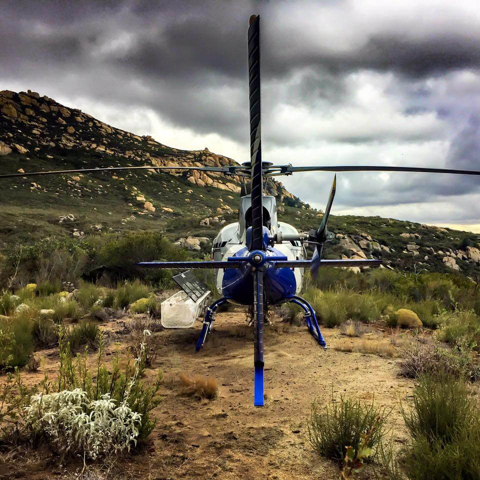 Utility Or Helicopter-Lift Services With Over 20 Aircraft